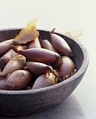 Shallots (Allium ascalonicum)