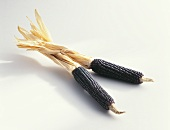 Small, dried, black corncobs from Italy
