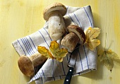Ceps on tea towel