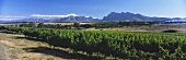 View over Paarl wine region onto Simonsberg, S. Africa