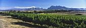 Blick Über das Weinbaugebiet Paarl auf den Simonsberg, Südafrika