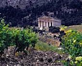 Antiker Tempel von Segesta mit Blick über kargen Weinberg in Trapani, Sizilien