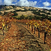 Navarro Vineyards, Navarro, Mendocino, Kalifornien