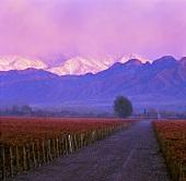 Las Compuertas Weinberg von Cheval des Andes, Lujan de Cuyo