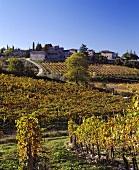 Vineyard at Castello di Ama, Tuscany, Italy