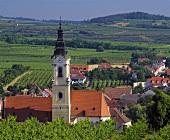 Das Dorf Langenlois von Wein umgeben, Niederösterreich