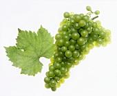 Orléans grapes with vine leaf