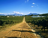 Laborie Wine Estate, Paarl, S. Africa