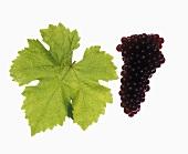 Frühroter Veltliner grapes with vine leaf