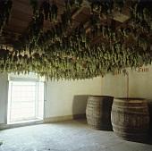 Trocknen von Trauben für Vin Santo, Fattoria Selvapiana