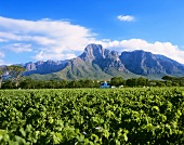 Boschendal Winery at foot of Groot Drakenstein, S. Africa