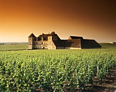 Clos de Vougeot with Château, Côte d'Or, Burgundy, France