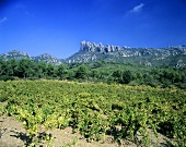 Vineyards near El Bruch, Montserrat in background, Penedès, Spain