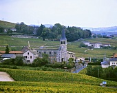 Chenas, one of the ten Beaujolais Cru areas, France