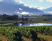 Vineyards, Tulbagh, S. Africa