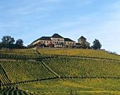 Schloss Johannisberg with its Riesling vineyard, Rheingau