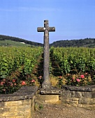 The 'La Tache' vineyard, Vosne-Romanee, Burgundy, France