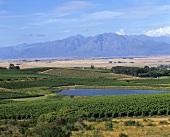 Wine region in Swartland near Riebeek West, S. Africa