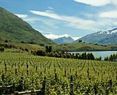 Weinberg Rippon am Lake Wanaka in Central Otago, Neuseeland