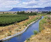 Olifants River – river and wine region in S. Africa