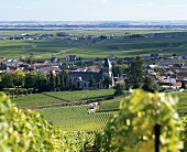 Oger, wine village in Côte des Blancs, Champagne, France