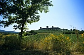 Monteriggioni, wine town in Tuscany, Italy