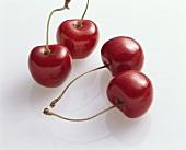 Sweet cherries (Prunus avium), variety 'Büttners rote Knorpel'