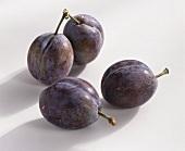 Four plums (Prunus domestica), variety 'Elena'