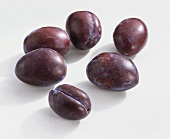 Plums (Prunus domestica), variety 'Anna Spath' from Romania