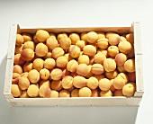 Apricots (Prunus ameniaca), variety 'Bergeron' from France