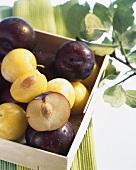 Japanese plums (Prunus salicina) in crate