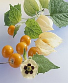 Cape gooseberries (Physalis peruviana) with leaves & flower