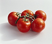 Tomatoes, variety 'Starfighter', with drops of water