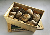 Quahog clams (America) in wooden crate