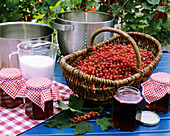 Jelly made from fresh redcurrants & preserving sugar