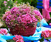 Hortensienblüten und Meerlavendel in rosafarbenem Korb