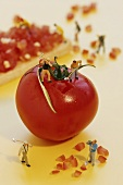 Miniature workers digging up the surface of a tomato