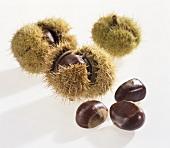 Sweet chestnuts (Castanea sativa) from Lana, S. Tyrol
