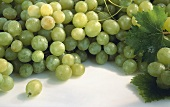 Many Fresh Green Grapes with Leaves