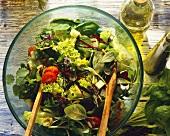 Lollo biondo lettuce with herbs