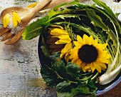 Sunflowers in a Bowl with Dandelion Greens
