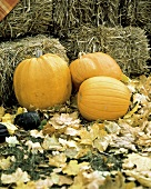 Pumpkins and Fall Leaves; Hay