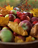 A Wooden Bowl with Apples Outside with Autumn Leaves