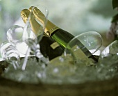 Champagne Glasses and Bottles on Ice
