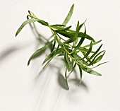 A Branch of Tarragon
