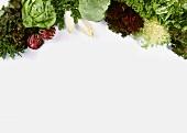 Still Life of Assorted Lettuce
