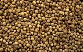 Many coriander seeds