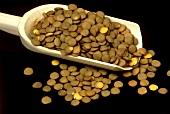 Brown lentils on wooden scoop