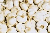 Many Bulbs of Garlic