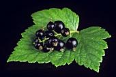 Black Currants on a Leaf
